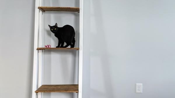 Cat shelf